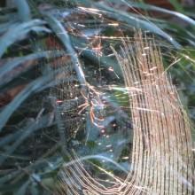 PAN_Spider